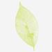 Cosmetici naturali a base di bava di lumaca - Almagreen