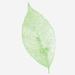 Trattamenti corpo cosmetica naturale - Almagreen